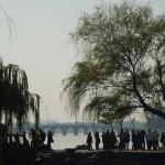 Salici piangenti (visione cinese)